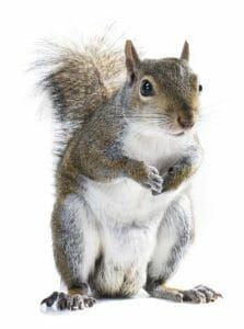 hampshire squirrel control