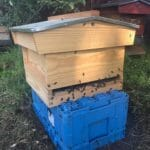 bee nest removal hampshire