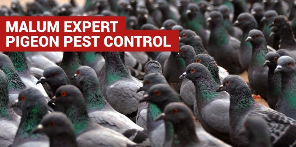 pigeon pest control west sussex
