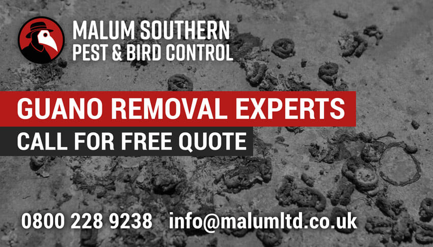 bird pigeon guano removal service