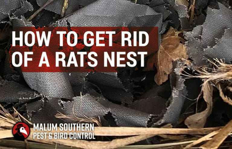 how to get rid of a rats nest
