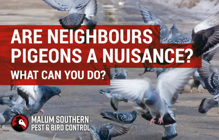 Next Door Neighbours Pigeons Are a Nuisance - What Can I Do?