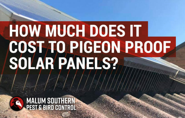 how much does it cost to pigeon proof solar panels